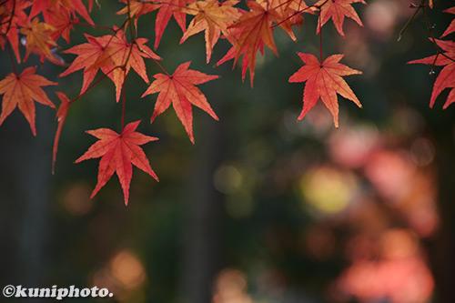 171128_kyoto_224_D5500