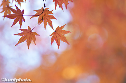 171128_kyoto_255_D5500