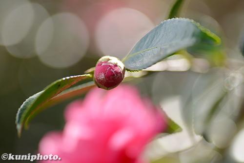 171201_kyoto_011