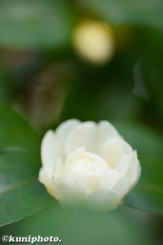 171201_kyoto_242