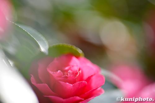 171201_kyoto_251