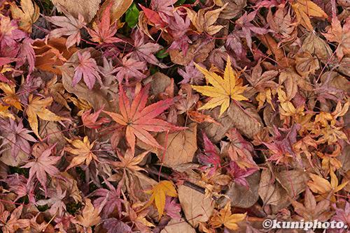 171201_kyoto_266