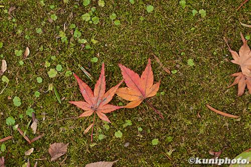 171201_kyoto_276
