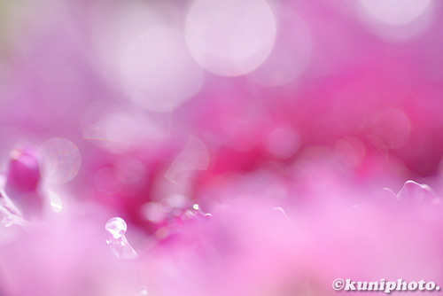 0302_180211_kyoto_088