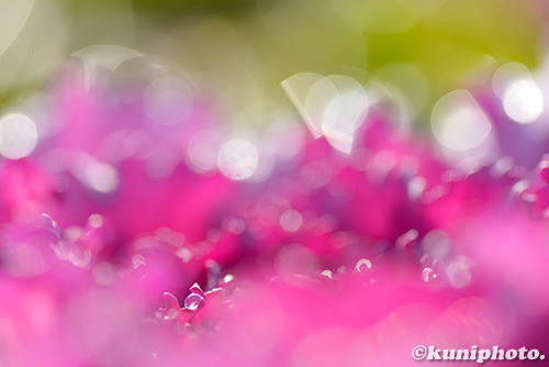180123_kyoto_034