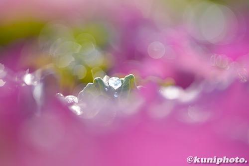 180123_kyoto_132