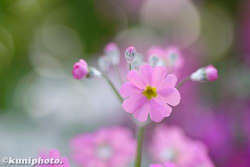 180211_kyoto_472