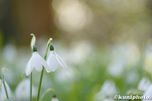 180220_kyoto_031