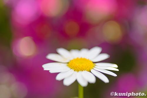 180220_kyoto_179