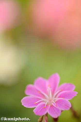 180304_kyoto_506