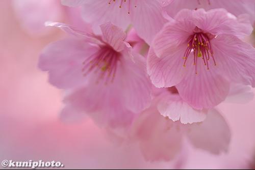 180325_tsurumi_001_D5500