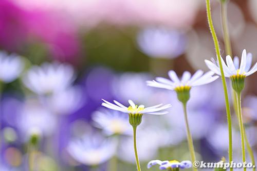 180304_kyoto_117