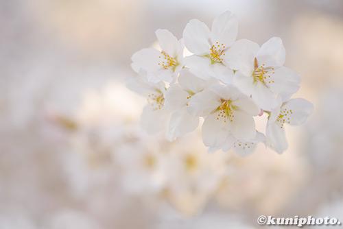 180328_kyoto_502