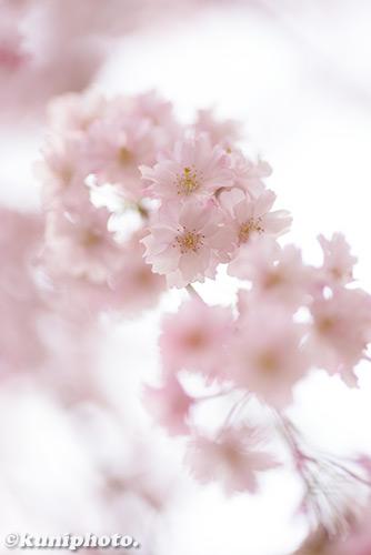 180402_kyoto_210
