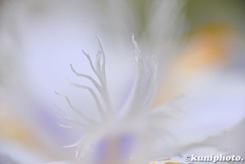 180413_hattori_665