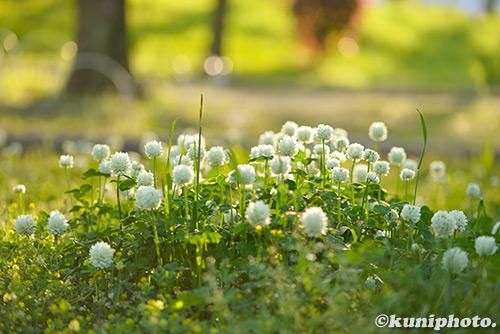 180422_tsurumi_0150