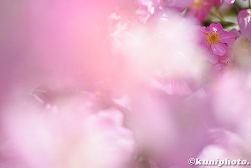 180522_kyoto_216