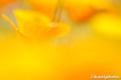 180522_kyoto_315