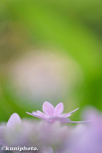 180624_kyoto_104