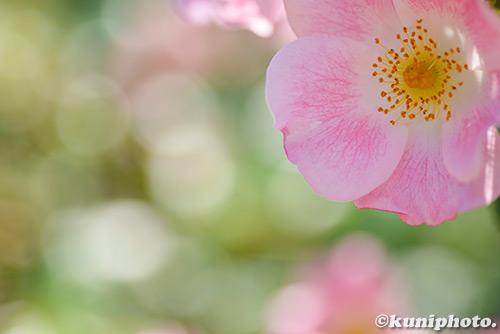 180522_kyoto_139
