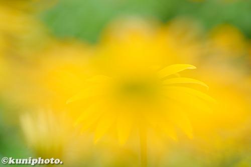 180621_kyoto_597