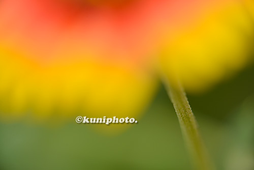 180807_kyoto_139