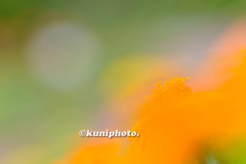 180807_kyoto_289