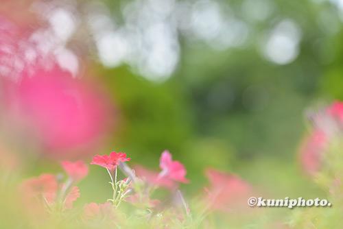 180810_kyoto_063