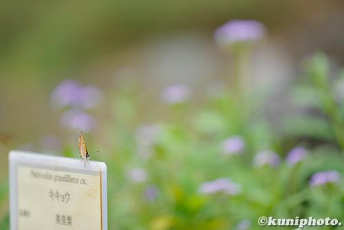 180830_kyoto_399
