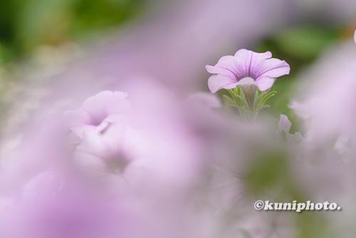 180807_kyoto_270