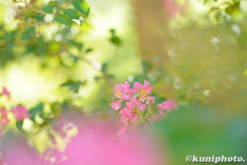 180822_tsurumi_036