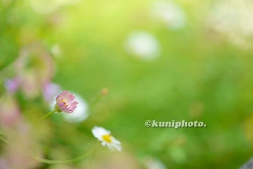 180822_tsurumi_483