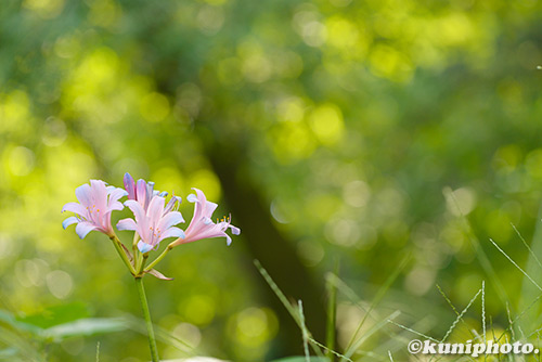 180830_kyoto_559
