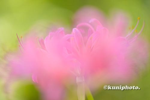 180902_kyoto_071