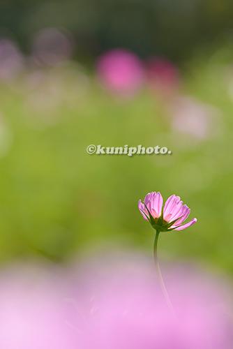 181014_banpaku_262