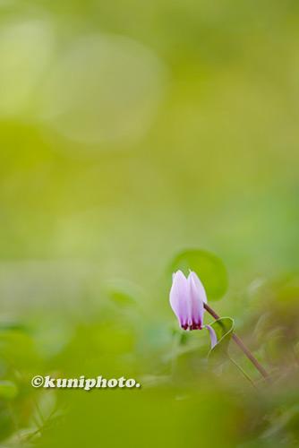 180902_kyoto_081