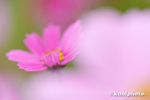 181104_kyoto_002