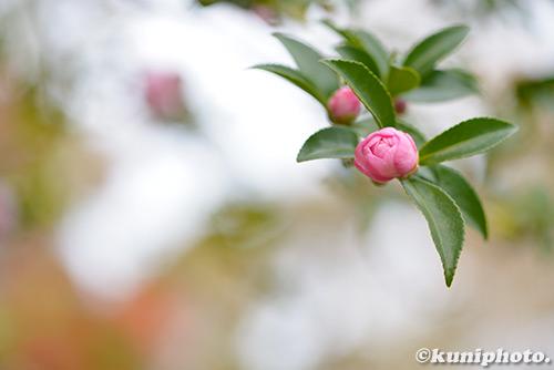 181116_kyoto_126