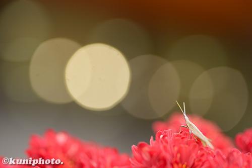 181116_kyoto_264