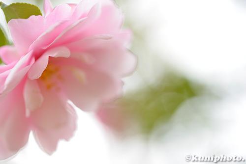 181116_kyoto_130