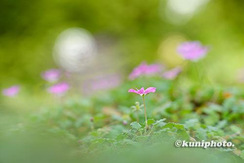 181202_konohana_054