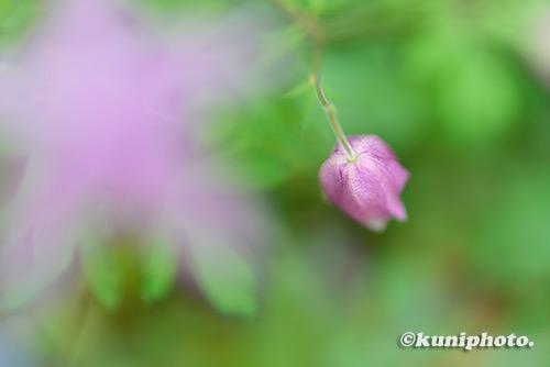 181202_konohana_057