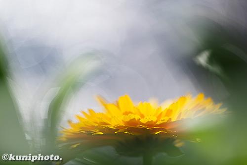 190104_hattori_161_XT3
