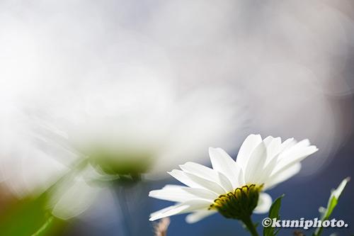 190104_hattori_170_XT3