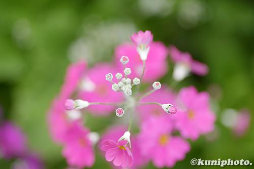 180211_kyoto_202