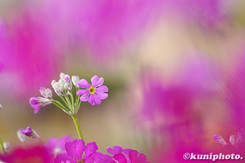 180211_kyoto_289