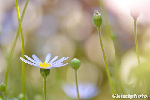 180304_kyoto_587