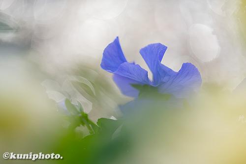190118_hattori_099_XT3