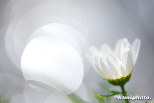 190127_hattori_086_XT3