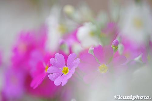 190209_kyoto_011_XT3